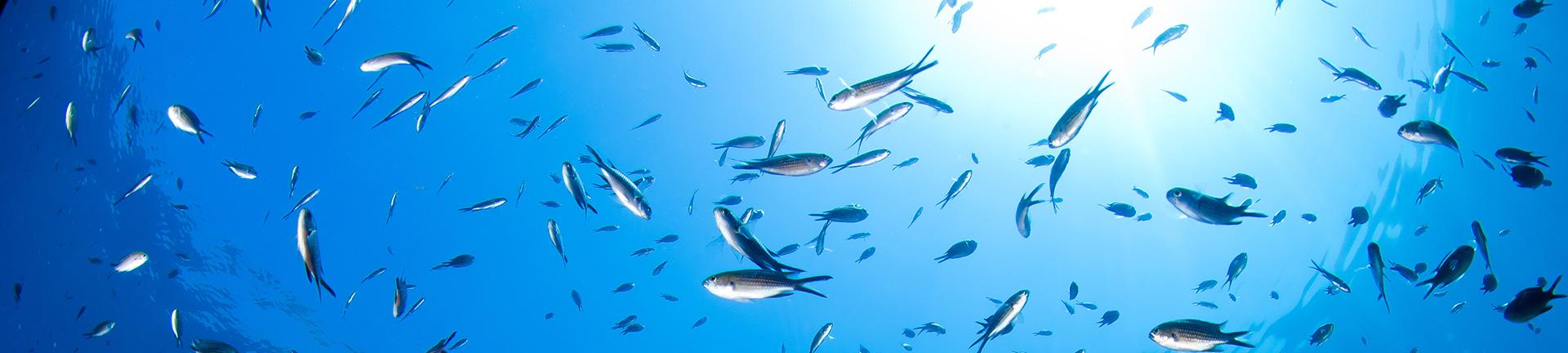 mare-pesci
